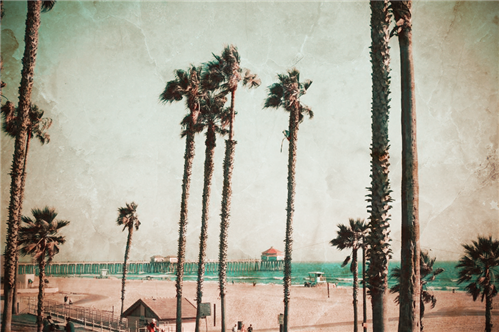 huntington beach palms